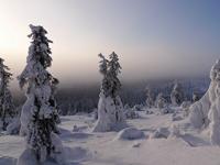 Новогодняя аренда коттеджей в Лапландии