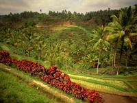 Тур на о.Бали, чистый отдых на море